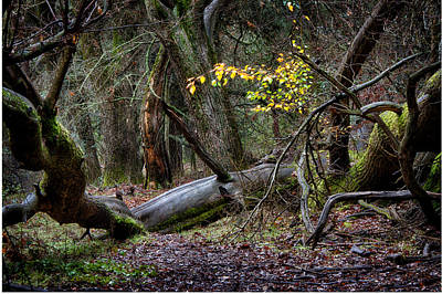 Photograph - New Growth In An Old Forest by Robert Woodward