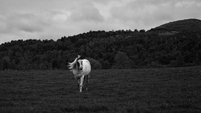 New Hampshire Photograph - New Hampshire Horse by Joseph Smith
