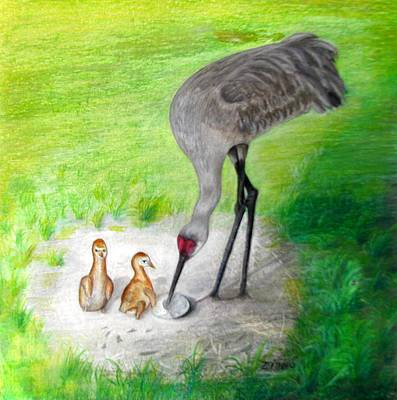 New Hatchlings Sandhill Crane Chicks Original by Zina Stromberg