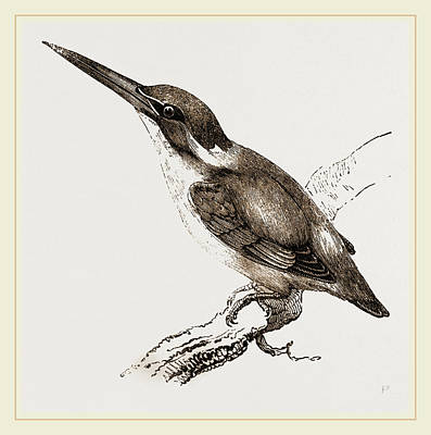 Kingfisher Drawing - New Holland Kingfisher by Litz Collection