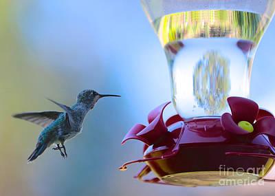 Photograph - New Hummingbird Feeder by Carol Groenen