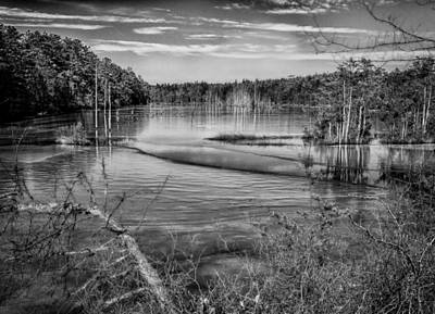 New Jersey Pine Barrens Photograph - New Jersey Pinelands by Louis Dallara