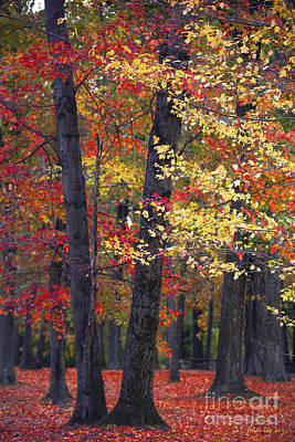 Of Fall Photograph - New Jersey's Reds by Marco Crupi
