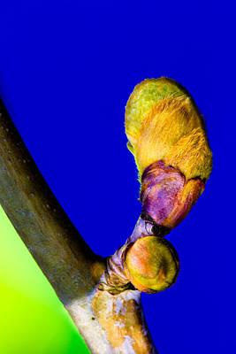 Photograph - New Leaf by Edgar Laureano