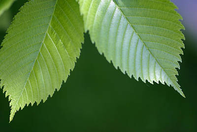 Photograph - New Leaves by Gene Walls