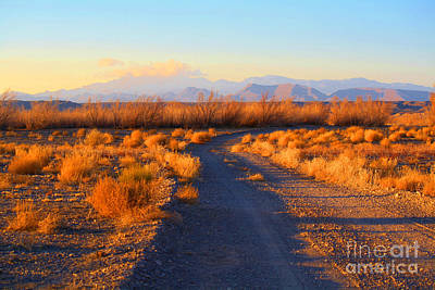 Photograph - New Mexico Back Country Road by Roena King