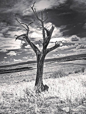 Photograph - New Mexico Dead Tree by Gregory Dyer