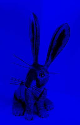 Photograph - New Mexico Rabbit Blue by Rob Hans