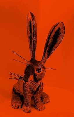 Photograph - New Mexico Rabbit Orange by Rob Hans
