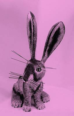 Photograph - New Mexico Rabbit Pink by Rob Hans