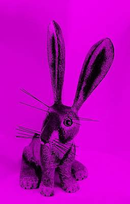 Photograph - New Mexico Rabbit Purple by Rob Hans