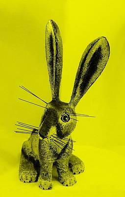 Photograph - New Mexico Rabbit Yellow by Rob Hans