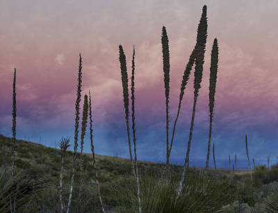 Photograph - New Mexico Sunset With Yucca by Jean Noren