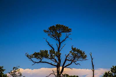 Music Figurative Potraits - New Mexico Tree by Angus Hooper Iii