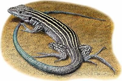 New Mexico Whiptail Lizard Art Print