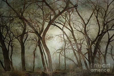New Mexico Winter Woodland Art Print by Andrea Hazel Ihlefeld