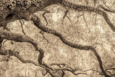 Photograph - New Orleans Audubon Park II by Scott Rackers