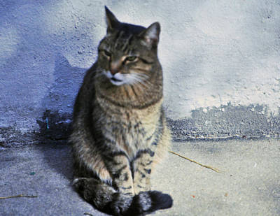 Photograph - New Orleans Cat by Helen Haw