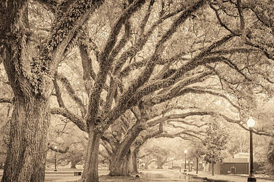 Photograph - New Orleans City Park II by Scott Rackers