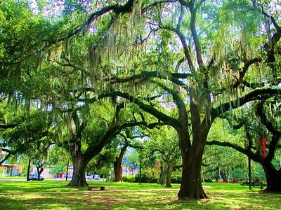 Photograph - New Orleans City Park - Live Oak by Deborah Lacoste
