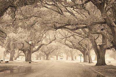 Photograph - New Orleans City Park by Scott Rackers