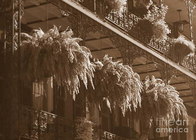 Photograph - New Orleans Ferns In Sepia by Carol Groenen