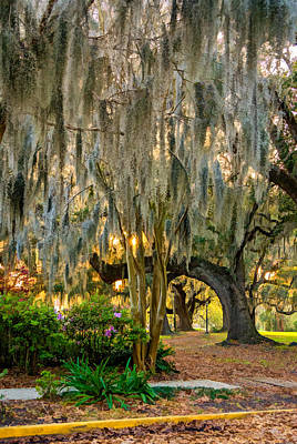 Live Oaks Digital Art - New Orleans - Spanish Moss by Steve Harrington