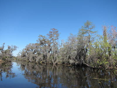 Swamp Photograph - New Orleans - Swamp Boat Ride - 1212102 by DC Photographer