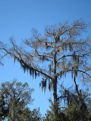 New Orleans - Swamp Boat Ride - 1212131 Art Print by DC Photographer