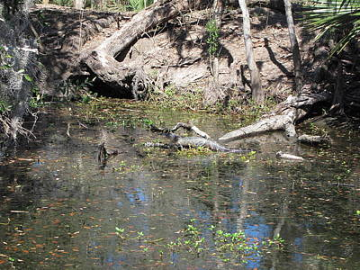 Ride Photograph - New Orleans - Swamp Boat Ride - 121253 by DC Photographer