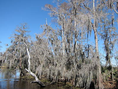 Boat Photograph - New Orleans - Swamp Boat Ride - 121293 by DC Photographer