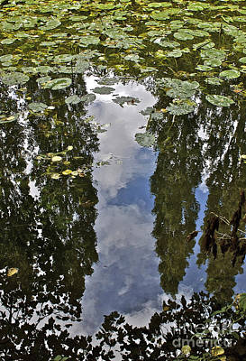 Reflections Amongst The Lily Pads Art Print