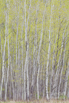 Photograph - New Spring Green by Alan L Graham