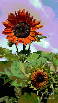 Photograph - New Sunflowers by Annette Allman
