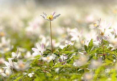 Art Print featuring the photograph New Time Springtime by Rose-Maries Pictures