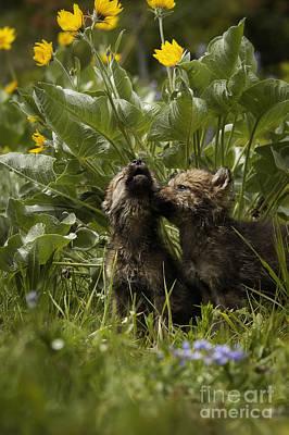 Mammals Photograph - New Voices by Wildlife Fine Art