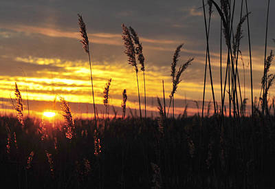 Photograph - New Year Sunset by Terry DeLuco