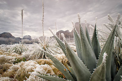Big Bend National Park Photograph - New Year's In Big Bend by Maria Blosser
