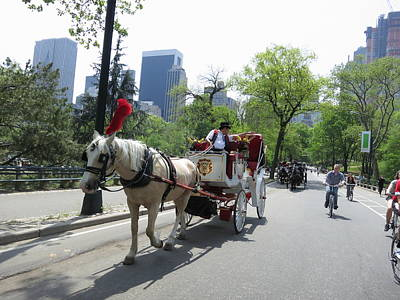 Carriage Photograph - New York City - Central Park - 12124 by DC Photographer