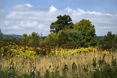 Goldenrod Photograph - New York September by Christina Rollo
