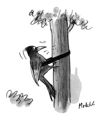 Woodpecker Drawing - New Yorker July 7th, 1975 by Frank Modell