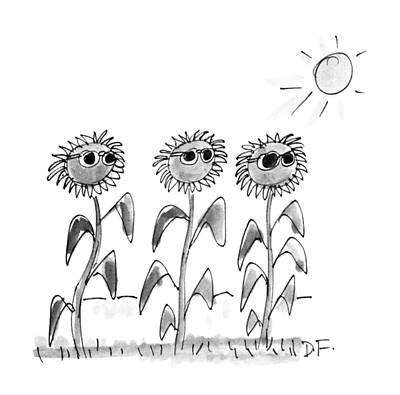Sunflowers Drawing - New Yorker June 18th, 1990 by Dana Fradon