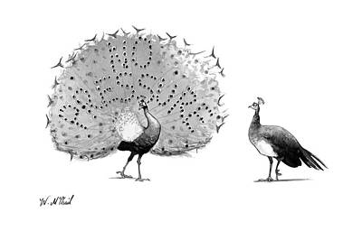 Peacock Drawing - New Yorker May 8th, 2017 by Will McPhail