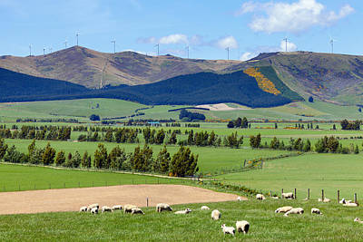 Photograph - New Zealand Countryside by Alexey Stiop
