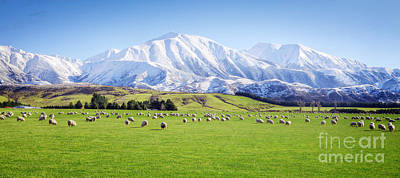New Zealand Photograph - New Zealand Farmland Panorama by Colin and Linda McKie
