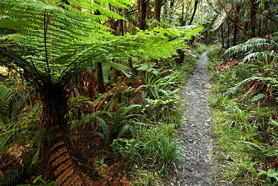New Zealand Forest Art Print by Les Cunliffe
