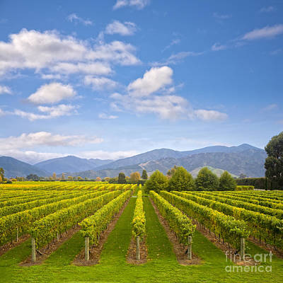 Winery Photograph - New Zealand Marlborough Vineyard In Early Autumn by Colin and Linda McKie