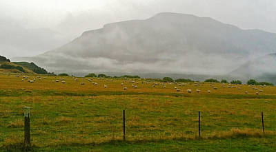 Photograph - New Zealand Sheep Farm by Stuart Litoff