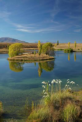 Pampas Grass Photograph - New Zealand, South Island, Mackenzie by David Wall