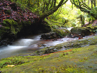 Photograph - New Zealand Stream by Amber Nissen